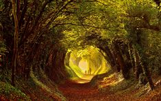 Trees on Old Roman Road at Halnaker, West Sussex with golden leaves on the floor A photographer has captured walkers as they pass through a tunnel of trees in Autumn colour