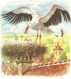 Egy régi mesekönyv gólyás képe. Baby Stork, Bird Theme, Spring Activities, Science Experiments Kids, Watercolor Bird, Fantasy Artwork, Animals And Pets, Habitats, Preschool