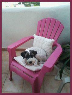 Rambito está así de bien en su casa de #acogida, pero necesita un hogar para siempre. http://protectoralacandela.org/saluditos/