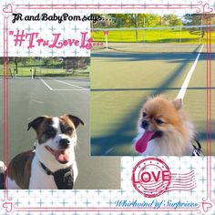 Whirlwind of Surprises: #JR & #BabyPom Talk About What #TruLoveIs -What's your #pets #truelove? #dogs #health #natural #food #ad @PetSmartCorp