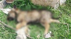 Isparta'daki Deri Organize Sanayi Bölgesi yakınlarında zehirlendiği tahmin edilen, aralarında yavruların da yer aldığı 18 köpek