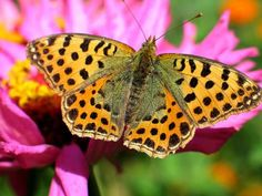 Beautiful Colorful Butterflies | years ago tags butterfly colorful butterflies butterflies ...