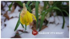 Even the flowers were disappointed to see the snow in Muskoka this morning. #PureMuskoka #Muskoka