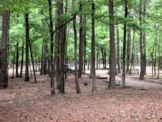 Holly Springs National Forest Located In MS