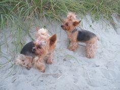 My 2 precioius girls @ the beach. 2015