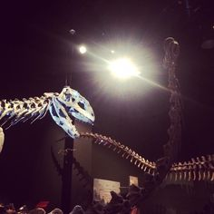 Majungasaurus and Rapetosaurus soak up the spotlight in SCI's new traveling exhibition, Ultimate Dinosaurs!