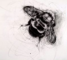 This adorable bee by April Coppini, charcoal on paper.