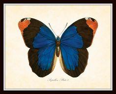 Vintage Butterfly Series 2 Papillon Plate 3 Art by BelleMaisonArt, $10.00