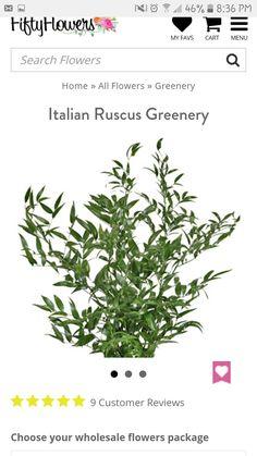 Italian Ruscus (at Import)