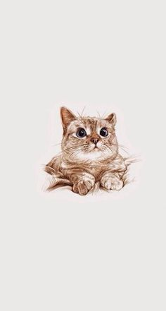 Cats With Down Syndrome I Love Cats, Cute Cats, Animals And Pets, Cute Animals, Cat Posters, Cat Wallpaper, Cat Drawing, Cat Art, Cats And Kittens
