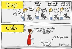 Differences Between Cats And Dogs – 60 Funny Pictures
