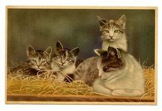 vintage-cat-postcard-beautiful-mum-cat-kittens-family-lie-in-straw