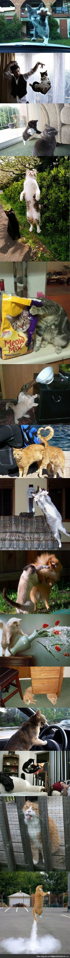 Cat photos taken at the right moment