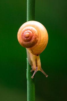 Snail by Lessy Sebastian