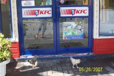 Outside a KFC in the Cayman Islands, irony abounds.