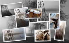 #fotografie #natuur #collage