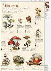 Giftpilze / Poisonous mushrooms