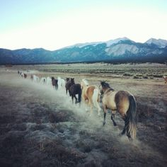 I can see Lauren in front of all these horses, leading them to the Wiggin's barn to show off how many horses she had trained....