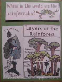 rainforest lap book Teaching Science, Kindergarten Activities, Science Activities, Rainforest Project, Rainforest Habitat, Science Classroom, Classroom Themes, Forest Classroom, Preschool Jungle