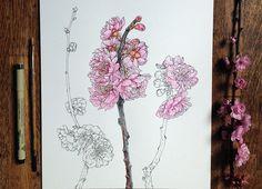 Глоток весны в рисунках Noel Badges Pugh. (7 фото)