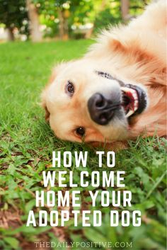 Welcoming an adopted dog into your home is a new and exciting adventure. Although fulfilling, it can also be tiresome. Your dog doesn't come home with a guidebook, so your experience will be met with trial and error. Here are four tips to welcome home your adopted dog.