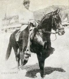 CABALLOS COLOMBIANOS: CABALLOS HISTORICOS DEL PASO FINO COLOMBIANO