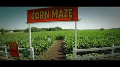 630 Ched & Santa's Annonymous are proud to bring you the 2014 Edmonton Corn Maze! Corn Maze, Western Canada, The Province, Capital City, Great Places, Plants, Plant, Planets