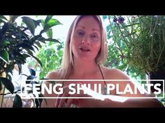 how to use plants for good feng shui applying good feng shui