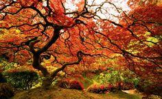 Otoño en toda su belleza (Portland, EE.UU.) 18 fotos que no podrás dejar de mirar