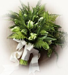 new zealand native ferns - Google Search