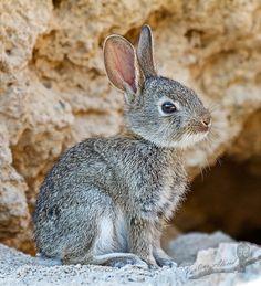 Rabbit by Paulino Alacid Fernández