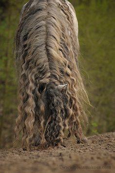 ... Preis, Dauerwelle Grose, Dauerwelle Dauerwelle, Schöne Frisuren