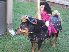 Funny Carousel Horse Costume for a Dog... This website is the Pinterest of costumes