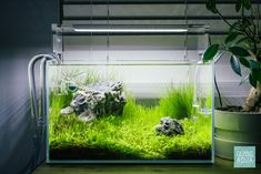 Need inspiration for a nano planted fish tank? Glass Aqua is the perfect place to find the look you want for your planted aquarium, aquatic plants, and more! Nano Aquarium, Nature Aquarium, Planted Aquarium, Aquatic Plants, Freshwater Aquarium, Fish Tank, Perfect Place, Night Light, Fresh Water