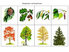 VK is the largest European social network with more than 100 million active users. Tree Identification, Autumn Activities For Kids, Elementary Science, Botanical Art, Montessori, Eye Candy, Projects, Tree Day, Plants