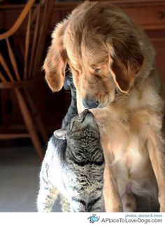 Cat and Dog - Look how they love each other!