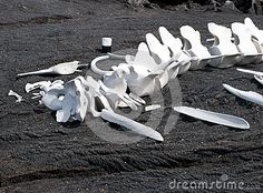These whale bones on a Galapagos beach have been bleached by the sun