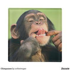 Chimpanzee Glass Coaster http://www.zazzle.com/chimpanzee_glass_coaster-256135073572396523?rf=238805303691357912