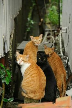 Cat. Catch @-@ bros !!!