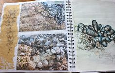 Julia Wright Jewellery: natural forms sketchbook mussel and barnacle drawings A Level Art Sketchbook, Sketchbook Layout, Sketchbook Pages, Fashion Sketchbook, Sketchbook Inspiration, Sketchbook Ideas, 3d Design, Sea Art, Handmade Books
