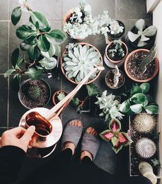 """Houseplant Club on Instagram: """"The watering ritual  : @_momoe_ welcome to the #houseplantclub """""""