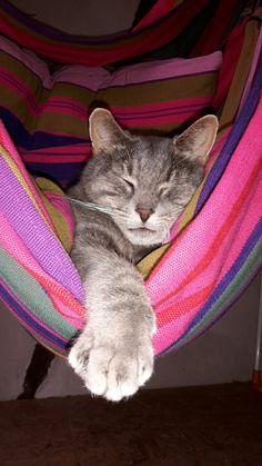 Katze Hängematte pink lila schlafen chillen