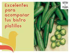El agua no quita la sensación de picor que produce el comer chile, pues el picante está compuesto de capsaicinoides, los cuales no son solubles al agua, por lo que es más recomendable beber leche o alcohol en estos casos.      www.bistropaloma.com.mx                          FACEBOOK                                                    https://www.facebook.com/bistropaloma TWITTER: https://twitter.com/BistroPaloma INSTAGRAM: https://instagram.com/bistropaloma/ LINKEDIN…