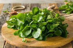raw green organic living water cress