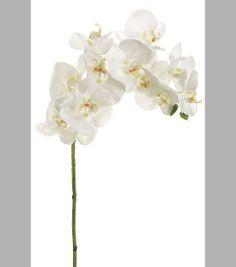 37'' Phalaenopsis Orchid Spray Cream at Joann.com