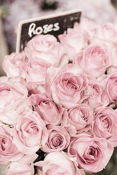 Fotografía París rosas pálidas en París flores por GeorgiannaLane