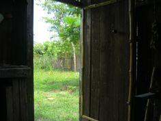 paisagem pela porta vendo o bambuzal