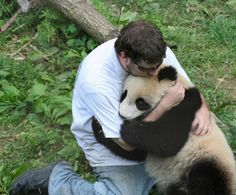 Frightend Panda after Earthquake. That's it, I'm moving to Asia right now to hug the scared pandas. Too precious! Animals And Pets, Baby Animals, Funny Animals, Cute Animals, Wild Animals, Cute Bear, Cute Panda, Big Bear, Amor Animal