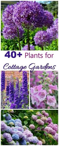 English cottage gardens have a very romantic feel to them. The look may seem haphazard but is actually planned. To choose cottage garden plants, think of tall flowering perennials, self seeding…MoreMore #FlowerGarden #englishflowergarden