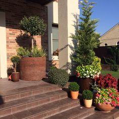 pot garden, pottery, photinia, garden. garten